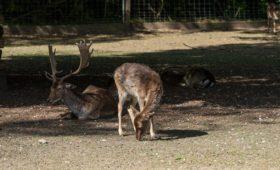 Tierpark Lange Erlen Basel